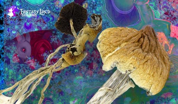 Top 3 magic mushroom for starters