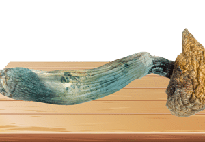 Blue Meanie Magic Mushrooms