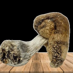 Huaulta Magic Mushrooms