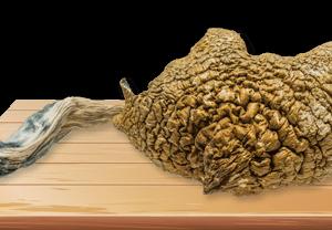 SyZygy Magic Mushrooms Deadhead Chemist