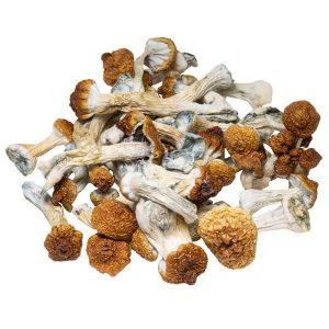 Amazonian Magic Mushrooms Bulk