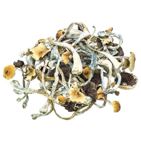 Golden Teacher Magic Mushrooms Bulk